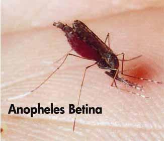 Apa Itu Malaria? apa itu malaria saat jauh