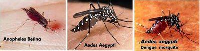 Apa Itu Malaria? pengaturan yang